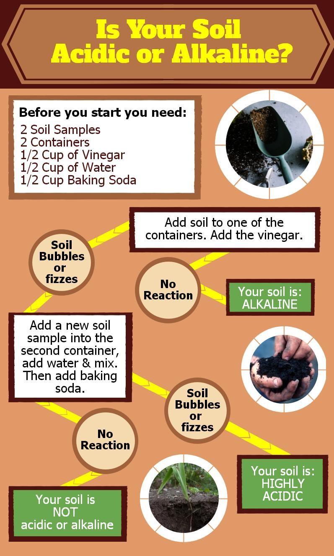 Is Your Soil Acidic or Alkaline?