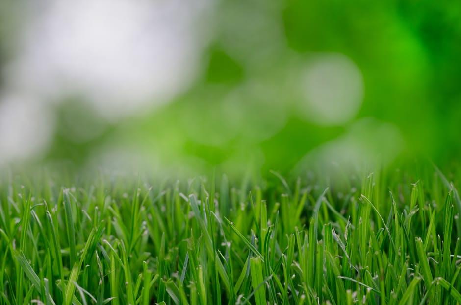 Laying Lawn – Turf Tips & Tricks