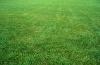 lawn_3
