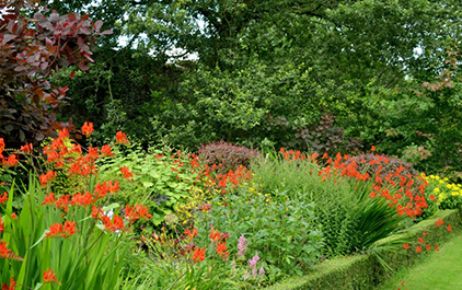 Garden bed with beautiful plants